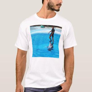 Colocación en delfínes playera