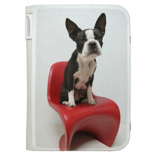 Cologalita con la silla Ⅱ