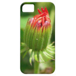 Colombian Flower Bud Case iPhone 5 Cases