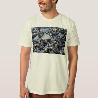 Colonia de grajos del lobo marino de la isla de poleras