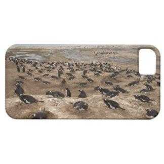 Colonia del pingüino de Gentoo (Pygoscelis Papua), iPhone 5 Carcasas