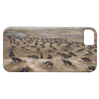 Colonia del pingüino de Gentoo (Pygoscelis Papua), iPhone 5 Funda
