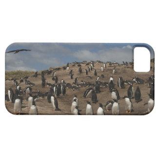 Colonia del pingüino de Gentoo (Pygoscelis Papua) iPhone 5 Fundas