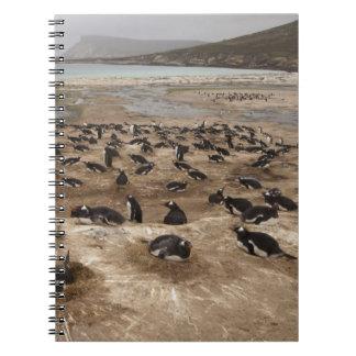 Colonia del pingüino de Gentoo (Pygoscelis Papua), Libro De Apuntes