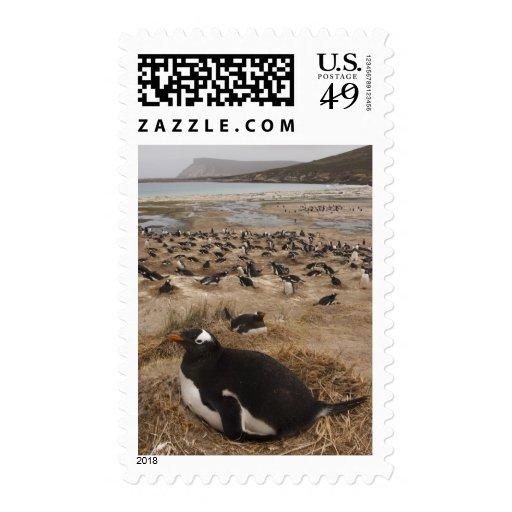 Colonia del pingüino de Gentoo (Pygoscelis Papua), Sellos