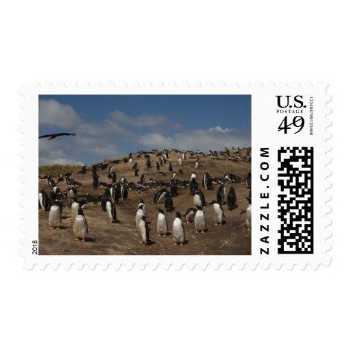 Colonia del pingüino de Gentoo (Pygoscelis Papua)  Envio