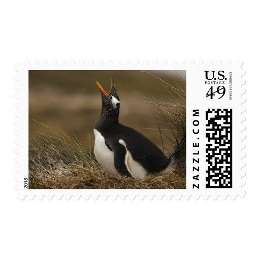 Colonia del pingüino de Gentoo (Pygoscelis Papua)  Sello