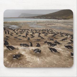 Colonia del pingüino de Gentoo (Pygoscelis Papua), Tapetes De Raton