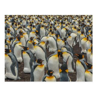 Colonia del pingüino de rey, Malvinas Postal