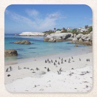 Colonia del pingüino en el práctico de costa de la posavasos personalizable cuadrado