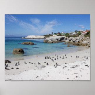 Colonia del pingüino en la playa de los cantos póster