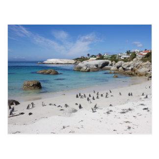 Colonia del pingüino en la playa de los cantos tarjeta postal