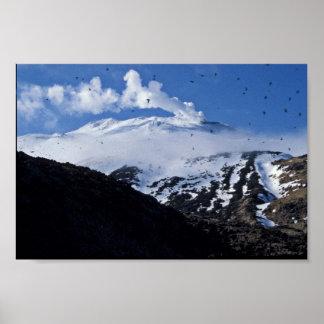 Colonia del volcán y del auklet de la isla de Kisk Poster