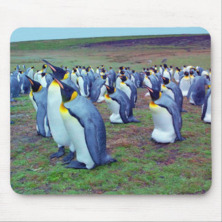 Colony emperor penguins mouse pad
