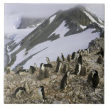 Colony of Chinstrap penguins Large Square Tile