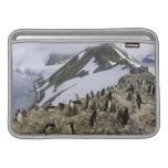 Colony of Chinstrap penguins MacBook Air Sleeve
