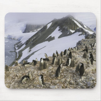 Colony of Chinstrap penguins Mouse Pad