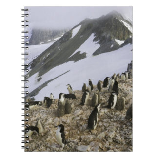 Colony of Chinstrap penguins Notebook