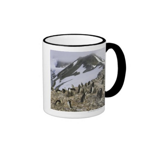 Colony of Chinstrap penguins Ringer Coffee Mug