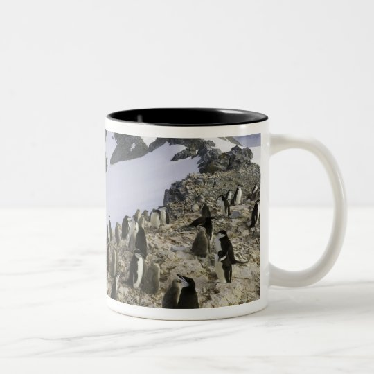Colony of Chinstrap penguins Two-Tone Coffee Mug
