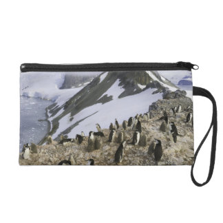 Colony of Chinstrap penguins Wristlet Purse