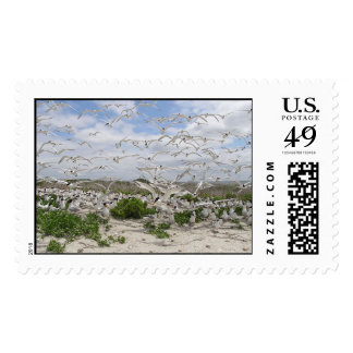 Colony of least and Royal terns. Postage Stamps