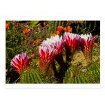 Color 2 del cactus postal