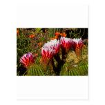 Color 2 del cactus postales