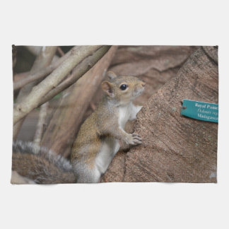 color animal lindo del árbol de la ardilla que toallas de mano