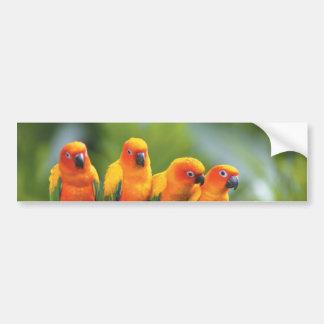 Color birds bumper sticker