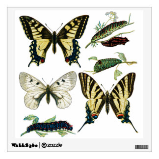 Color Butterflies and Caterpillars Diagram Wall Sticker