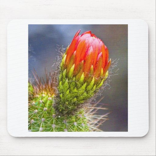 Color Cacti Bloom Mouse Pad