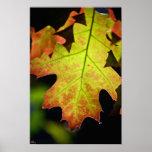Color Changing Leaf Print