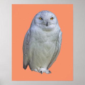 Color de fondo de encargo del búho blanco sabio póster