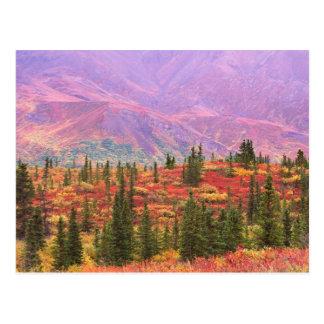 Color de la caída en el parque nacional de Denali Postal