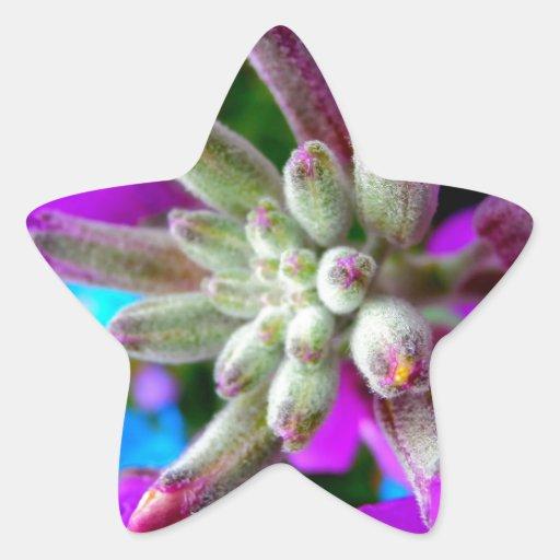 Color de la primavera calcomanías forma de estrella