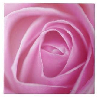 Color de rosa, Alemania Azulejo Cuadrado Grande