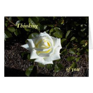 Color de rosa amarillo claro:  Pensando, en usted Tarjeta De Felicitación