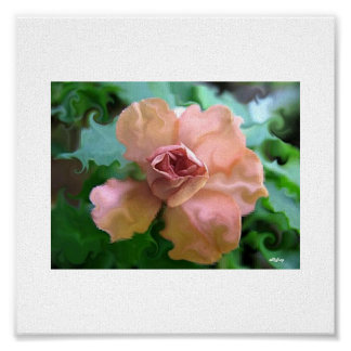 Color de rosa amelocotonado póster