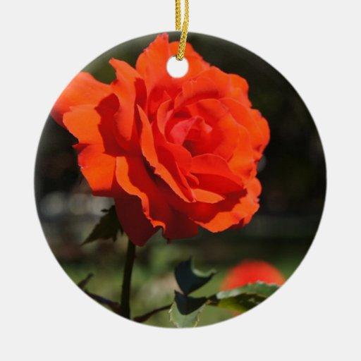 Color de rosa anaranjado adorno de reyes