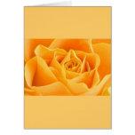 Color de rosa anaranjado bonito felicitaciones
