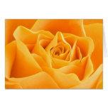 Color de rosa anaranjado bonito tarjetas