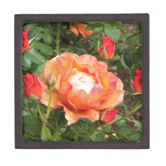 Color de rosa anaranjado con el cerco de los brote caja de joyas de calidad