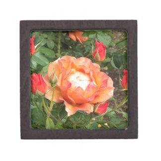 Color de rosa anaranjado con el cerco de los brote caja de recuerdo de calidad