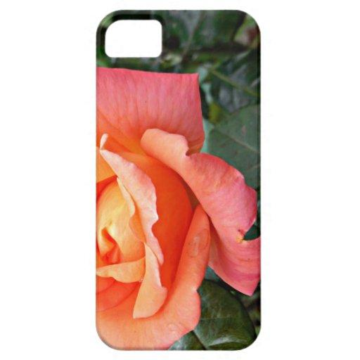 Color de rosa anaranjado con las hojas verdes funda para iPhone SE/5/5s