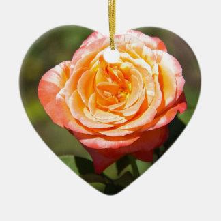 Color de rosa anaranjado con los bordes rosados ornamente de reyes