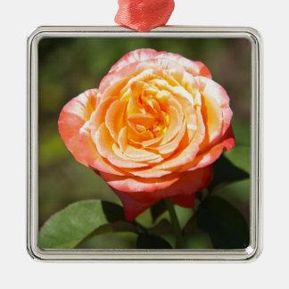 Color de rosa anaranjado con los bordes rosados ornamento de reyes magos