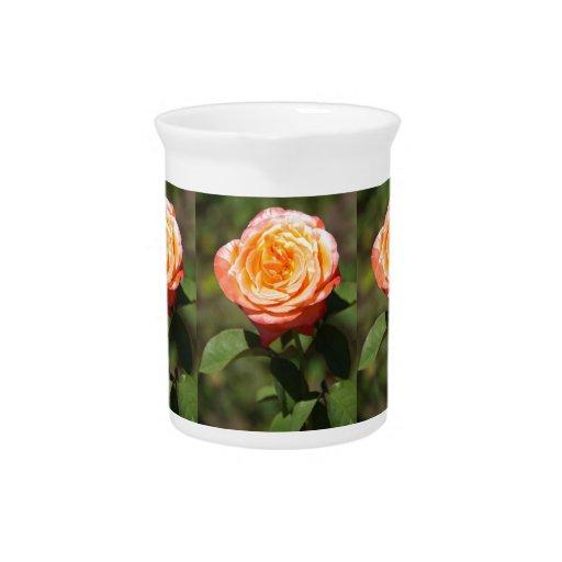 Color de rosa anaranjado con los bordes rosados jarra para bebida