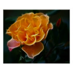 Color de rosa anaranjado del deslumbramiento y el  impresiones
