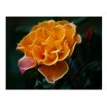 Color de rosa anaranjado del deslumbramiento y el postal